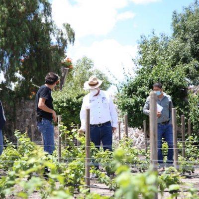 SEDEA fortalece la competitividad productiva de viñedos en el Estado