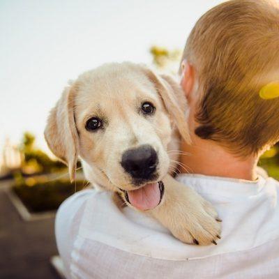 Inicia campaña de esterilización de perros en Huimilpan