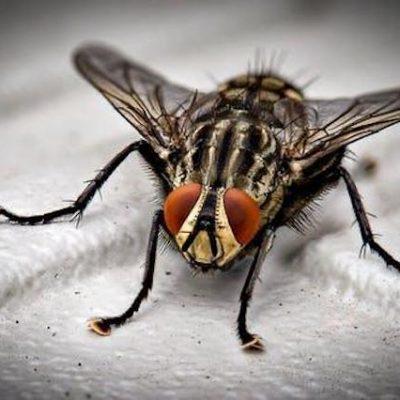 El cubo de la mosca – Rodolfo Lira Montalbán